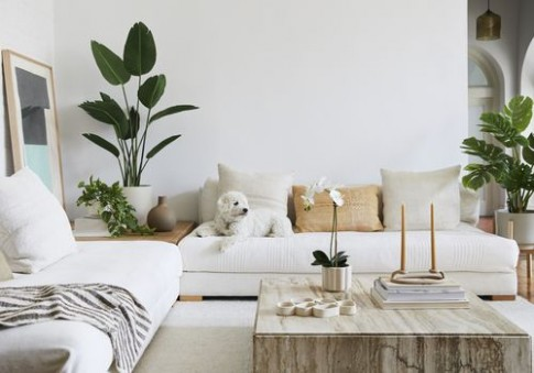 14 Online Plant Delivery Services to Bring the Outdoors In - living room plants | living room plants