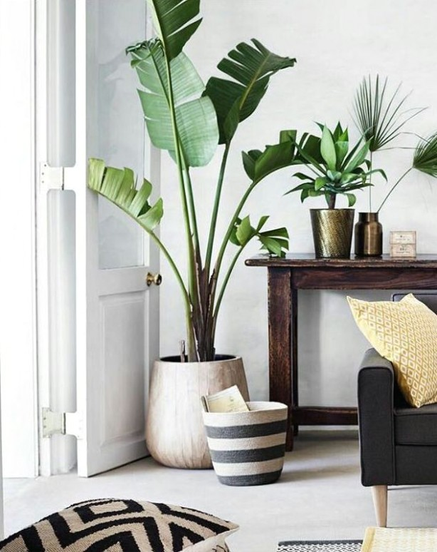 Beautiful plant. Perfect for a cozy indoor space. | Home decor .. | living room plants