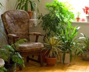 Living Room Houseplants - Tips On Growing Plants In The Living Room | living room plants
