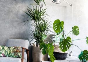 14 Beautiful Ways To Decorate Indoor Plant in Living Room – living room plants