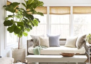 14 Best Indoor Trees – Large Indoor Plants for Every Room in Your Home – living room plants