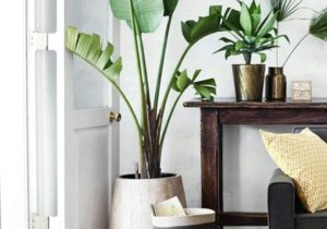 Beautiful plant. Perfect for a cozy indoor space. | Home decor ..