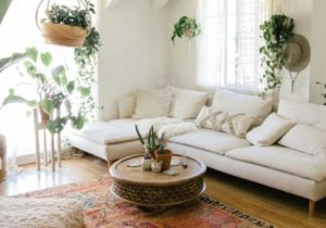 The 14 Best Tall Indoor Plants – living room plants